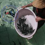 بازار ماهی خاویار ازون برون و سوروگاا