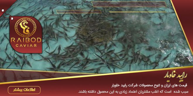 فروش عمده بچه ماهی خاویار