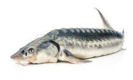 فروش گوشت ماهی خاویار