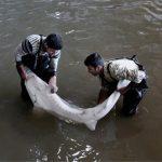 تامین کننده ماهی خاویاری