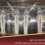 بازار تولید فیل ماهی بلوگا