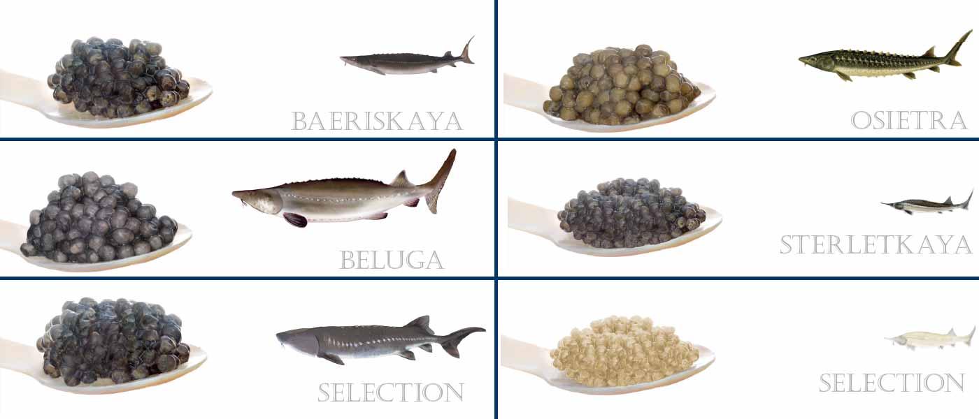 بازار ماهی و خاویار