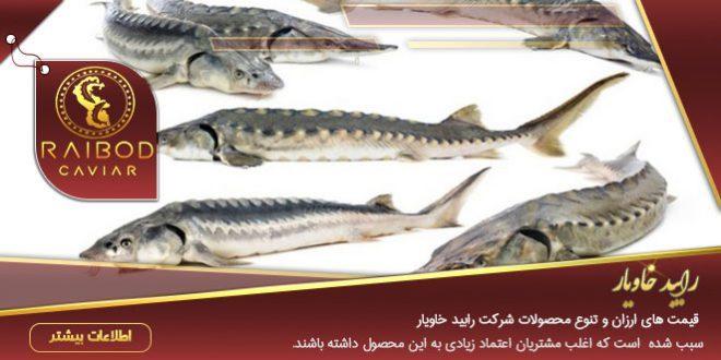 کنسرو ماهی خاویار