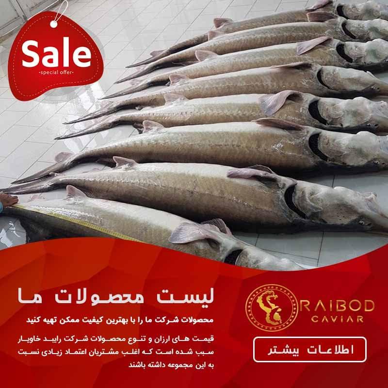 اخریخرید اینترنتی و فروش ماهی خاویارن قیمت خرید ماهی خاویار خزر