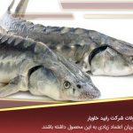 سایت خرید انواع ماهی خاویاری