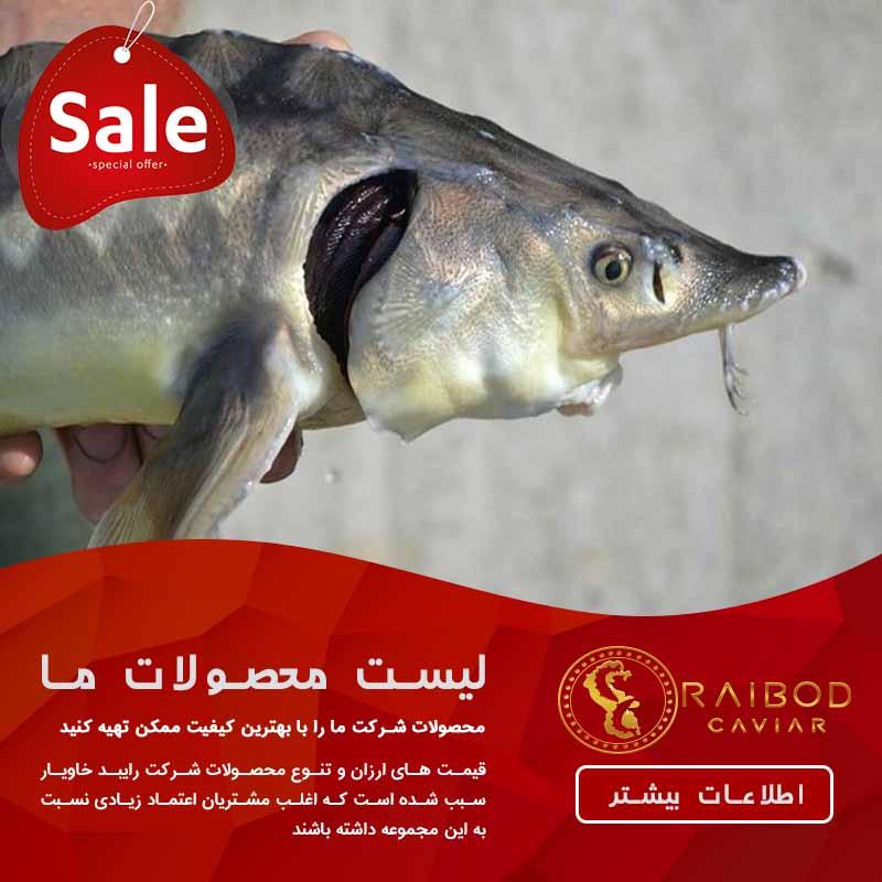 فروش ماهی خاویار قره برون