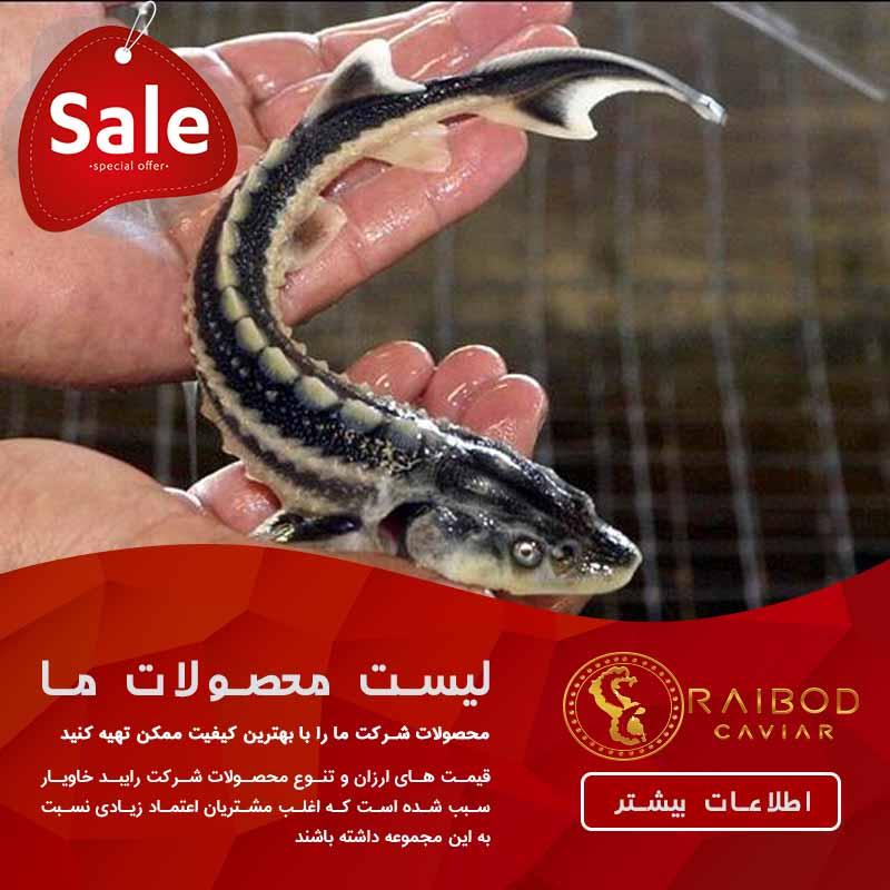قیمت خرید و فروش انواع بچه ماهی خاویاری