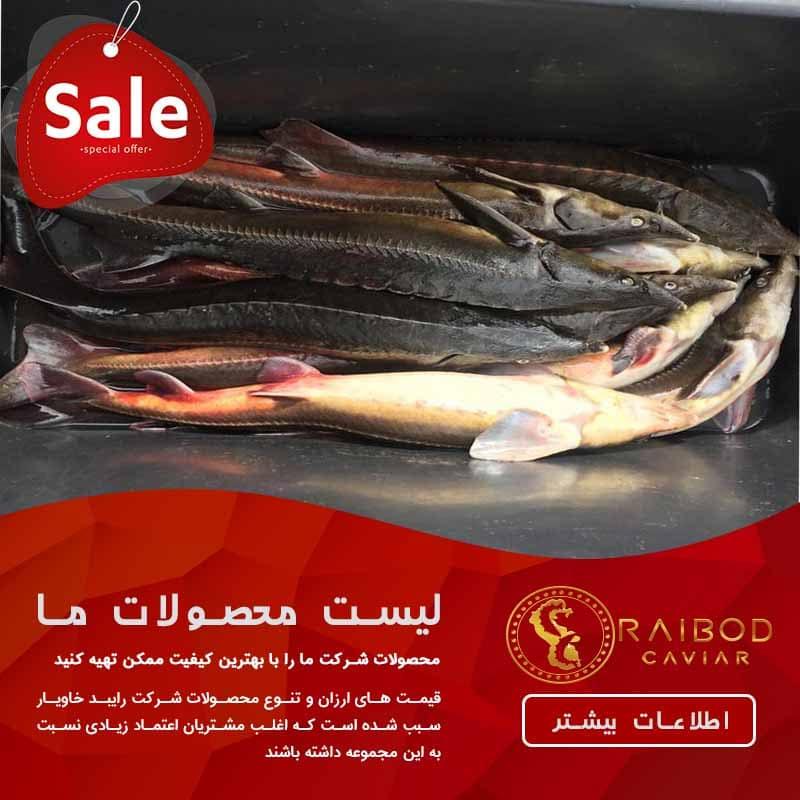 فروش گوشت فیل ماهی