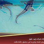 خرید انواع بچه ماهی خاویاری ایرانی