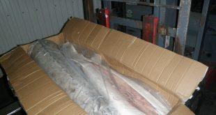 صادرات گوشت ماهی خاویاری به اسپانیا