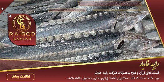 مراکز فروش انواع ماهی خاویار