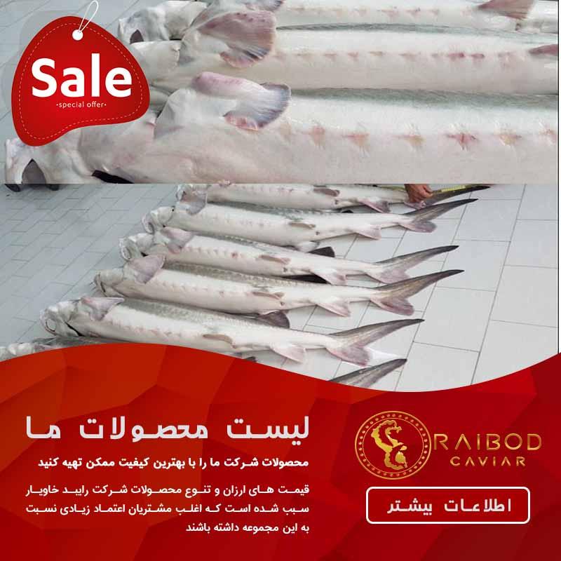 عرضه کننده مستقیم ماهی خاویار بلوگا