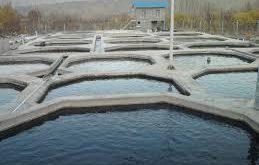 بزرگترین تولیدی ماهی اوزون برون