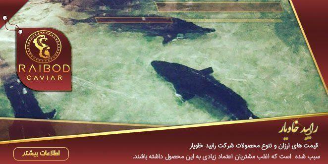 پرورش فیل ماهی خاویاری دریای خزر