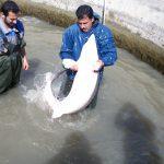 فروش اینترنتی فیل ماهی خاویار