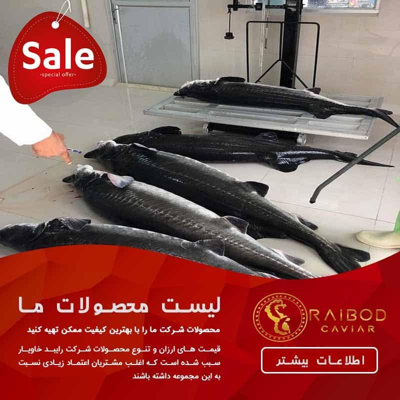 عرضه ماهی خاویار اعلا با قیمت ارزان
