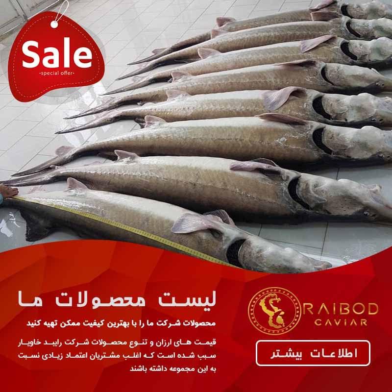 آخرین قیمت خرید ماهی خاویار خزر