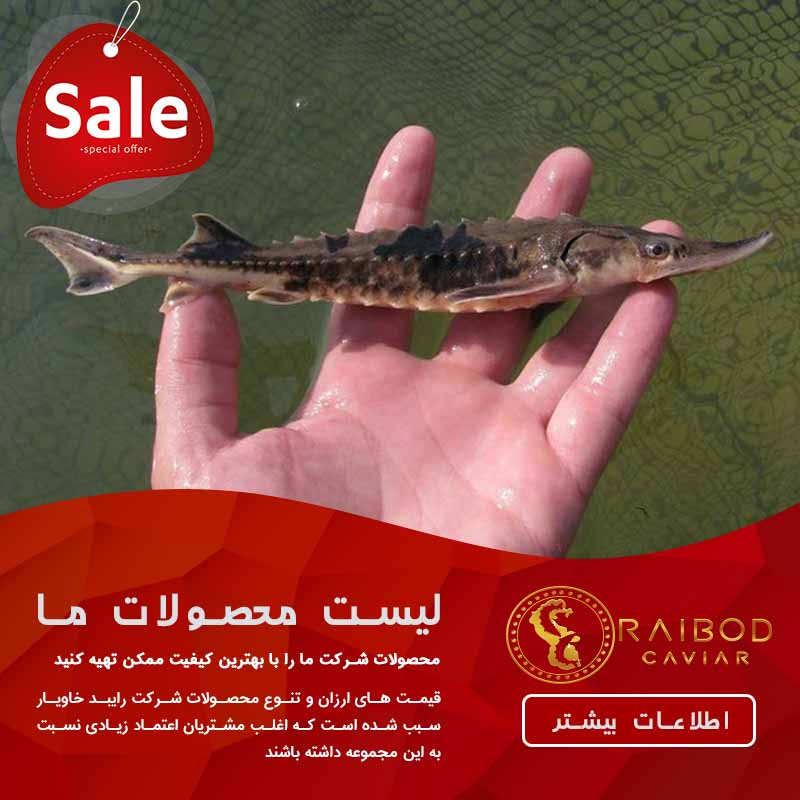 عرضه بچه ماهی خاویاری در اصفهان