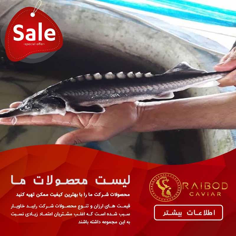 نکات مهم در مورد قیمت بچه ماهی خاویاری