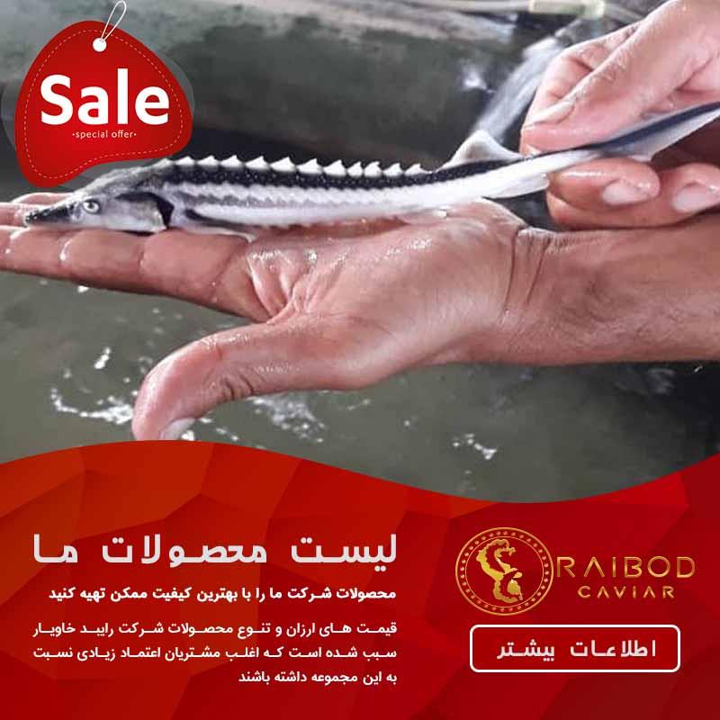 فروش اینترنتی انواع بچه ماهی