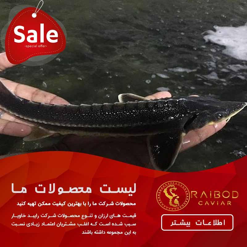 قیمت بچه ماهی خاویاری