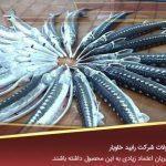 خرید و فروش ماهی خاویار
