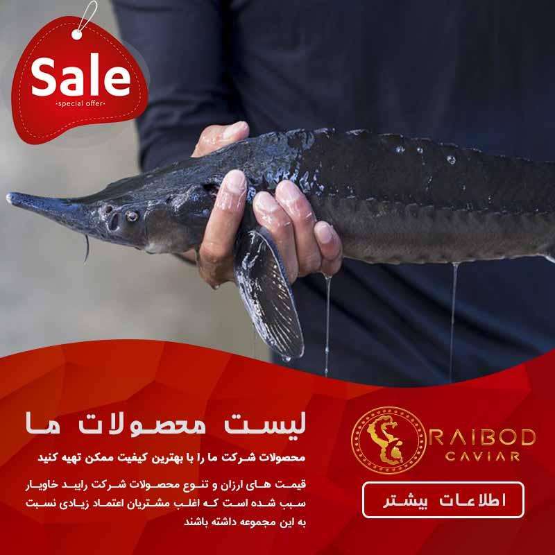 قیمت خرید روز بچه ماهی خاویاری