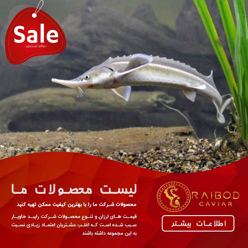 فروش ماهی اوزون برون با قیمت مناسب