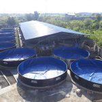 تولید ماهی خاویاری در گیلان