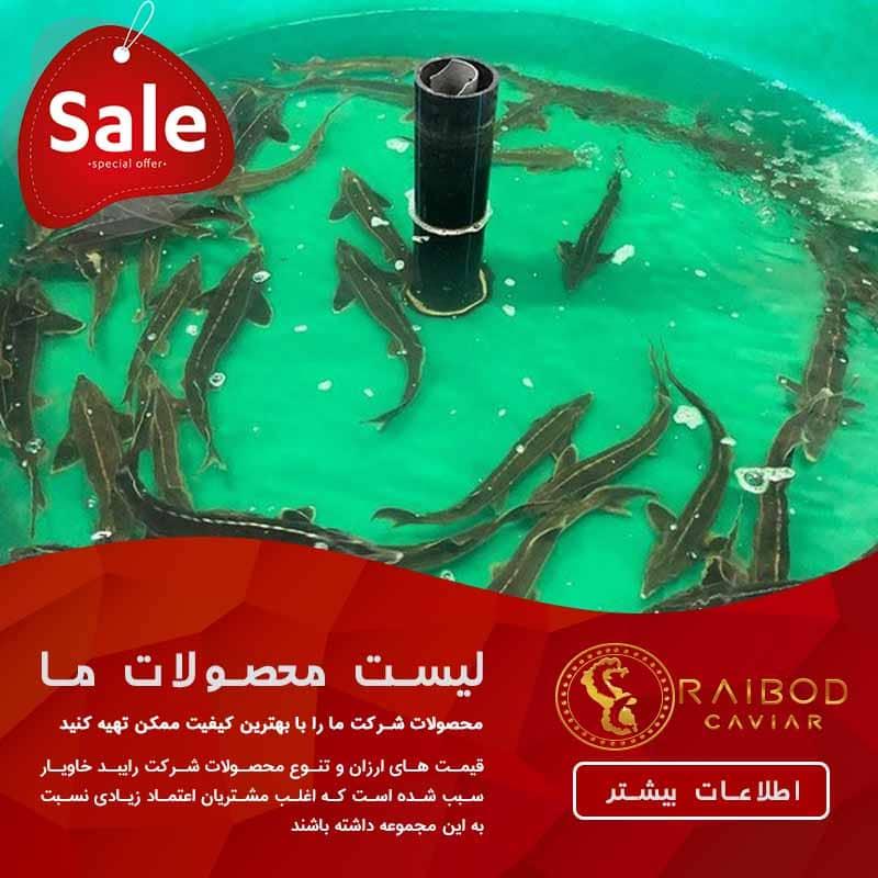 زمان خرید ماهی خاویاری از شیلات