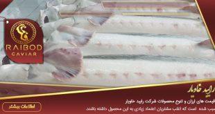 صادرات و فروش ماهی بلوگا