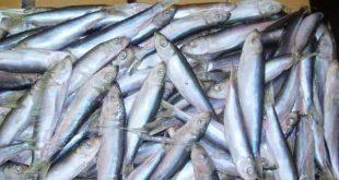 غذای ماهی خاویار