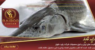 خرید و فروش ماهی اوزون برون