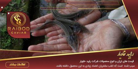 فروش بچه ماهی خاویار در اصفهان