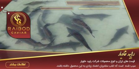 فروش ویژه ۲ تن فیل ماهی خاویاری