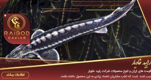 فروش گوشت ماهی اوزون برون