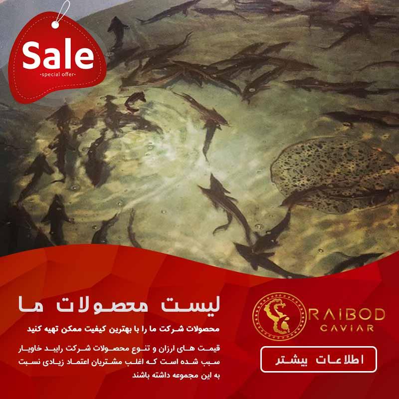 گیلان و مازندران قطب تولید ماهیان خاویاری