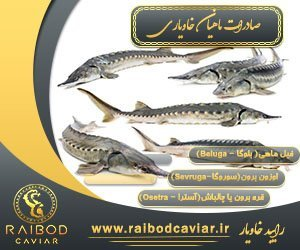 صادرات ماهی اوزون برون