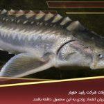 فروش ماهی خاویار