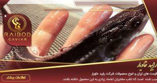 پخش بچه خاویار ماهی