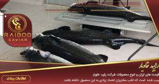 آخرین قیمت ماهی خاویار