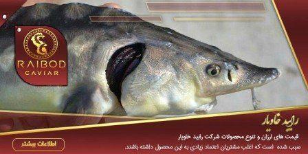 قیمت ماهی خاویار سیاه