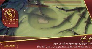پخش ماهی خاویار سفید