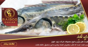 پخش ماهی خاویار عمده