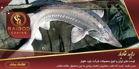 خرید ماهی خاویاری بلوگا