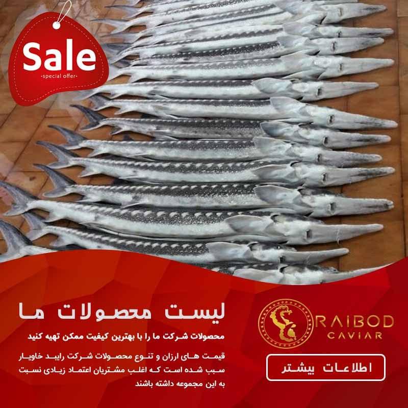 قیمت فروش ماهی خاویار