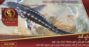 ماهی خاویار سیبری