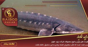 فروش انواع ماهی خاویار زنده
