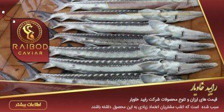 قیمت عمده ماهی خاویار
