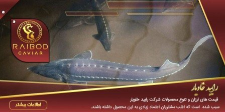 تولید و پرورش ماهی خاویار